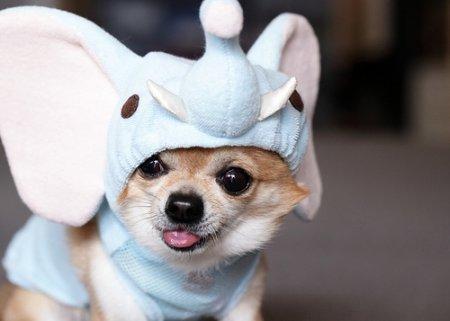Собака - отличный подарок?
