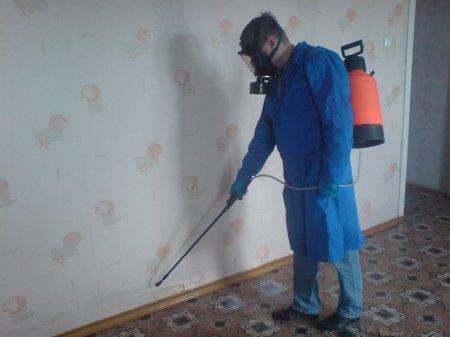 Травля тараканов в Житомире и области